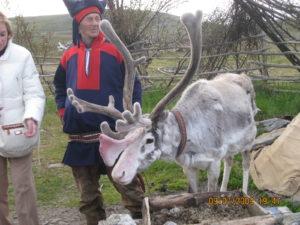 Un Sami con la sua renna.