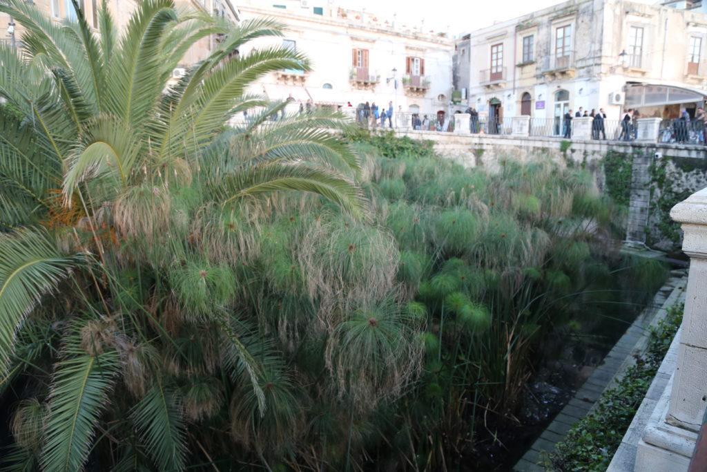 Isola di Ortigia, Fonte Aretusa.