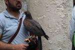 Il falconiere.