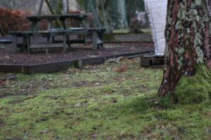 Fort Augustus. Uno scoiattolo rosso.
