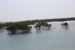 Zona umida protetta
